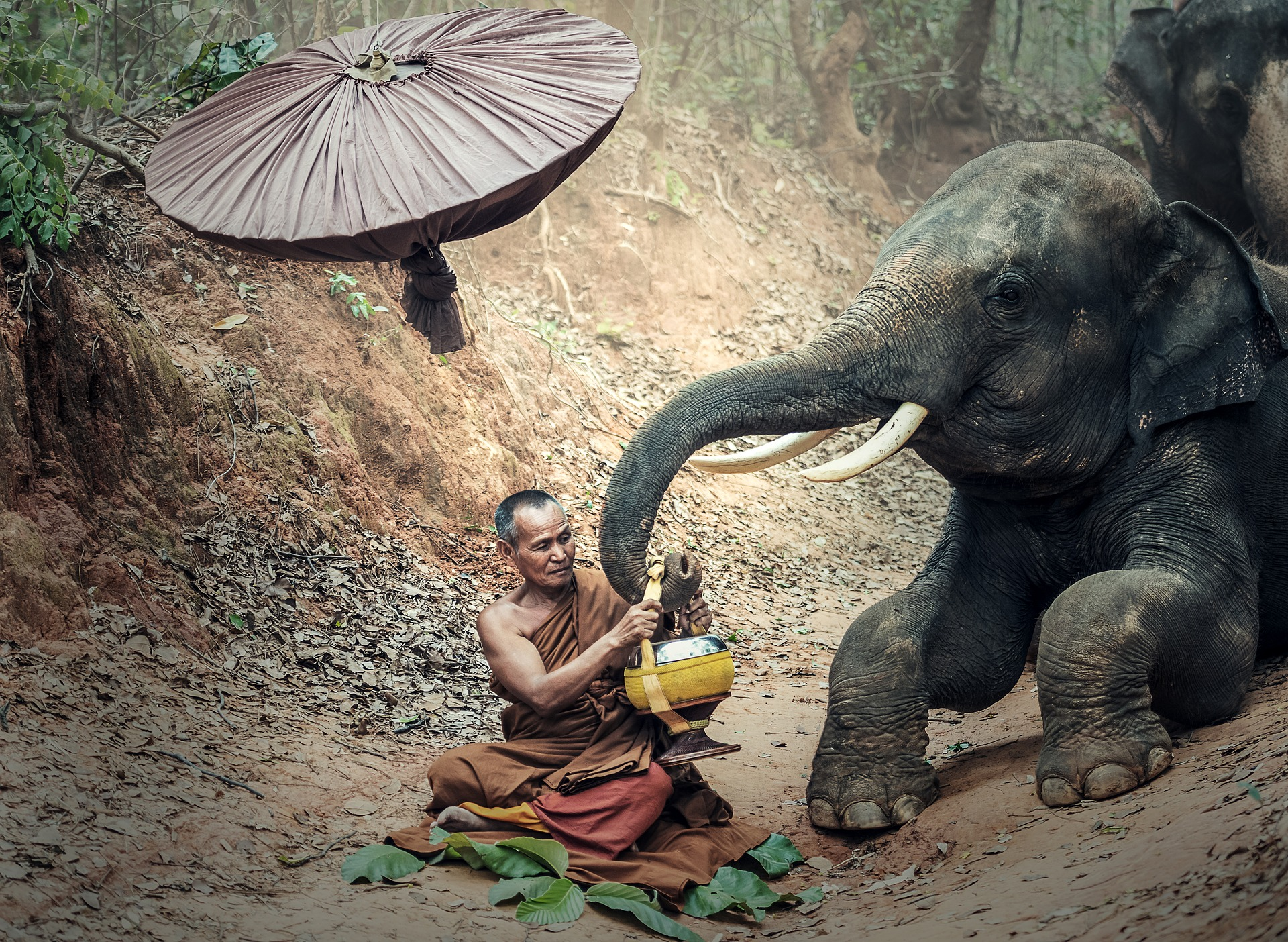 elephant-1822516_1920